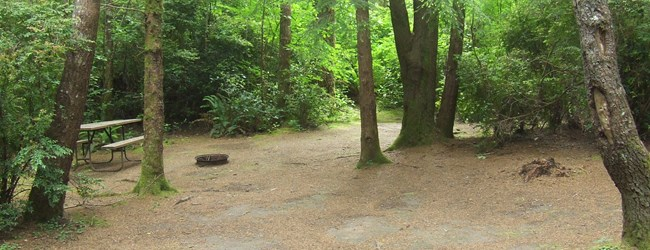 Our tent sites are nestled in the trees