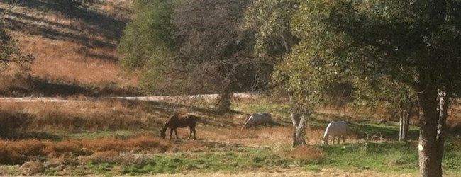 Nice view of the neighbor's horses
