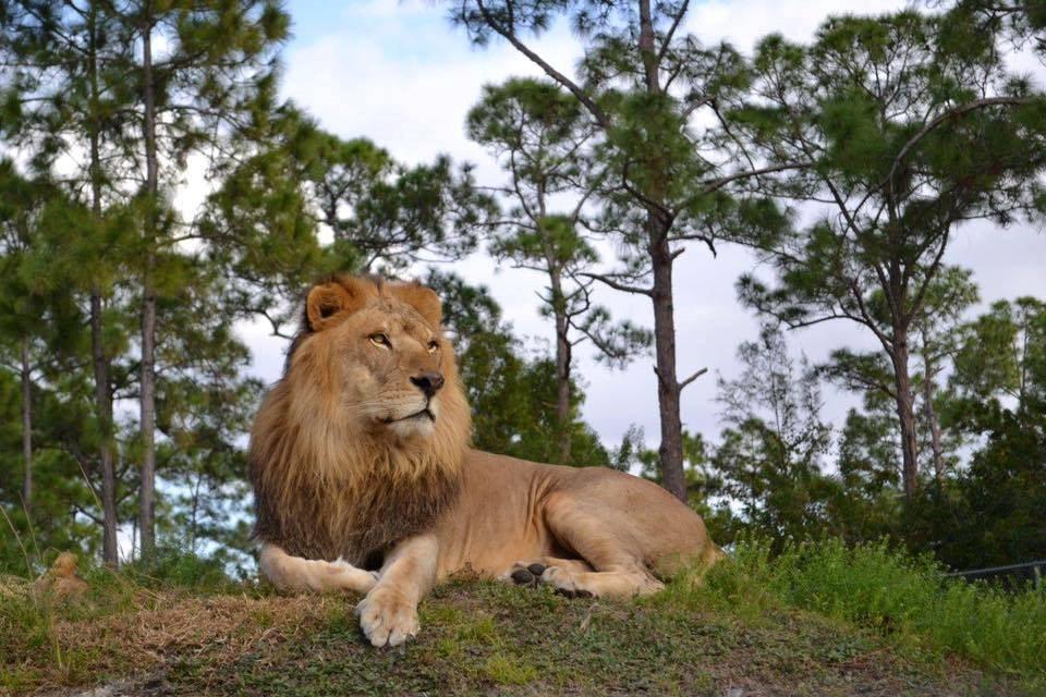 6 unique koa s koa camping blog for Lion country safari cabins