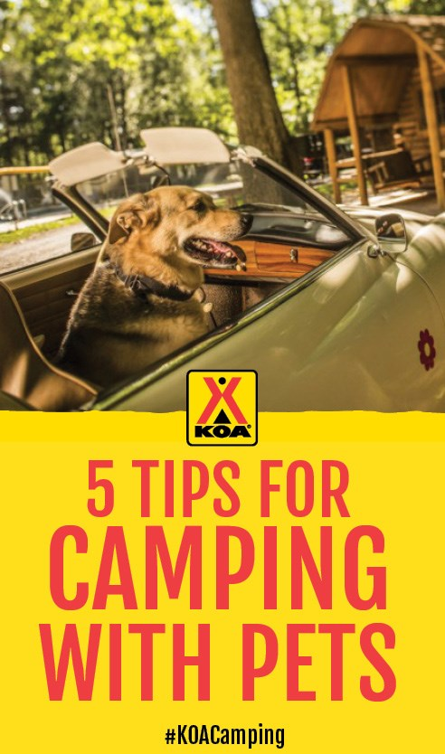 5 Tips for Camping with Pets #KOACamping