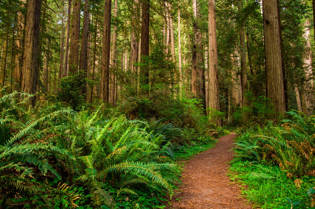 Redwood-National-Park-Northwest-Coast-Dream-Trip