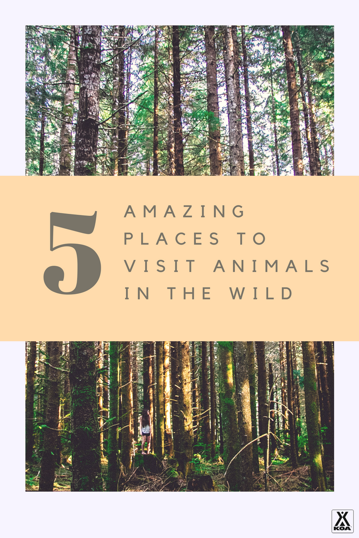 Visit these amazing places to view wildlife.
