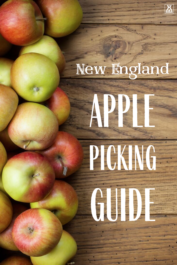 Discover the best times to go apple picking in New England, where you can find the best apples, different New England apple varieties & more!