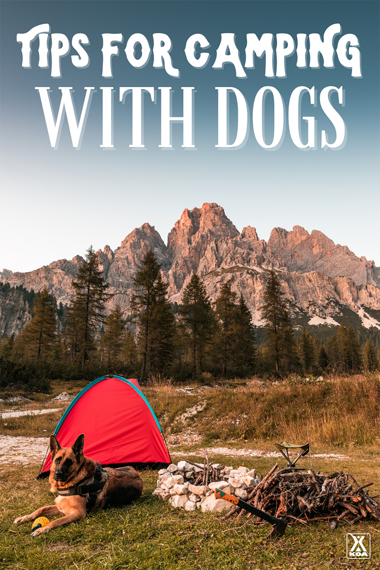 Want to try camping with your dog? Check out our guide for tips on gear to bring, preparing for your trip and making the most of the experience with your furry friend!