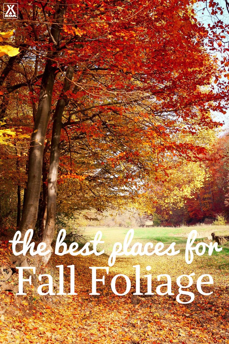Go HERE for fall foliage!