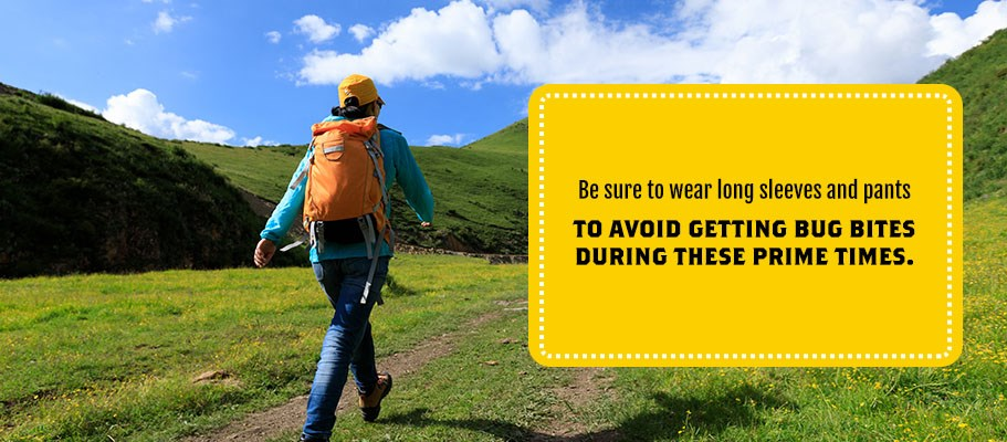 How to Keep Bugs Away While Camping | Keep Insects Out of Your Tent