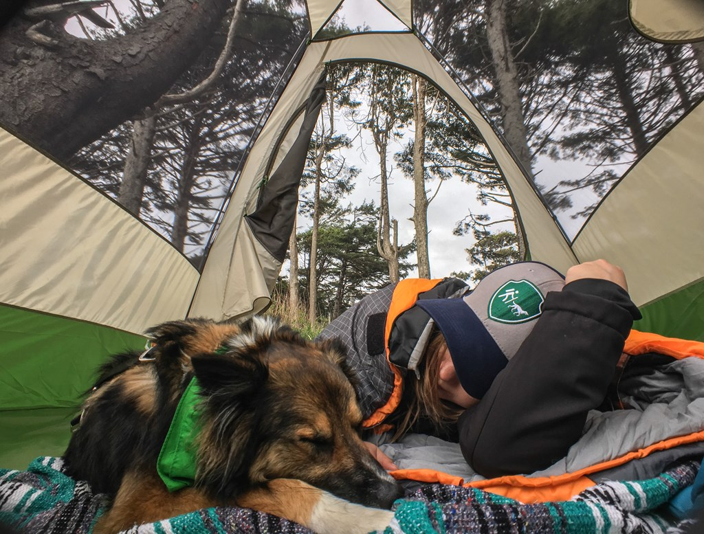 9 Expert Tips for Camping and Hiking with Dogs | KOA Camping