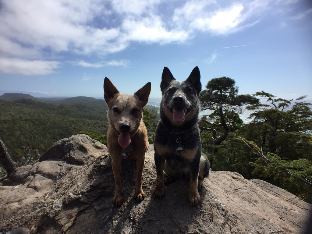 west_coast_heeler_pack