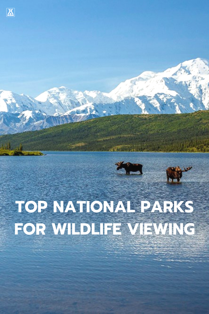 If you want to see awesome wildlife you'll want to visit these US national parks. #NationalPark #FindYourPark #Wildlife