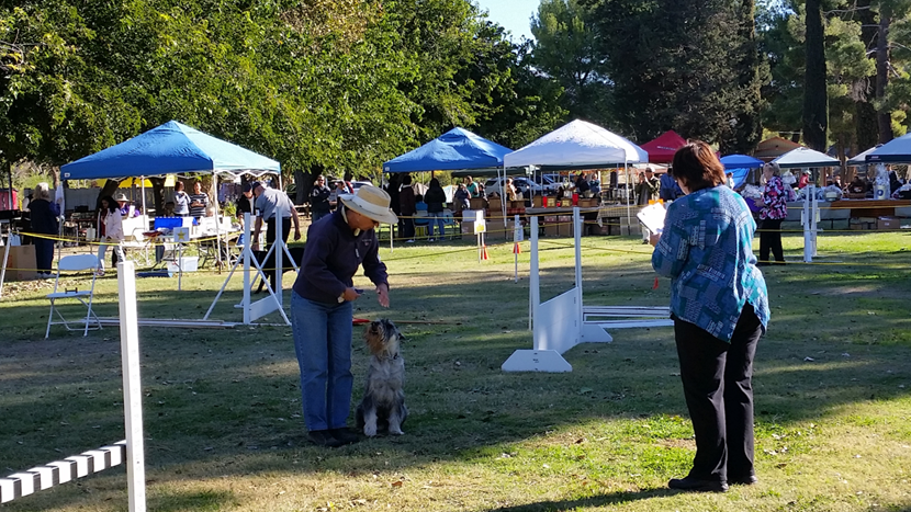 Dog Shows- we also welcome furry-Kampers!