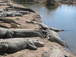 Colorado Alligator Farm - See KOA OFFICE for discount tickets and gator food coupon