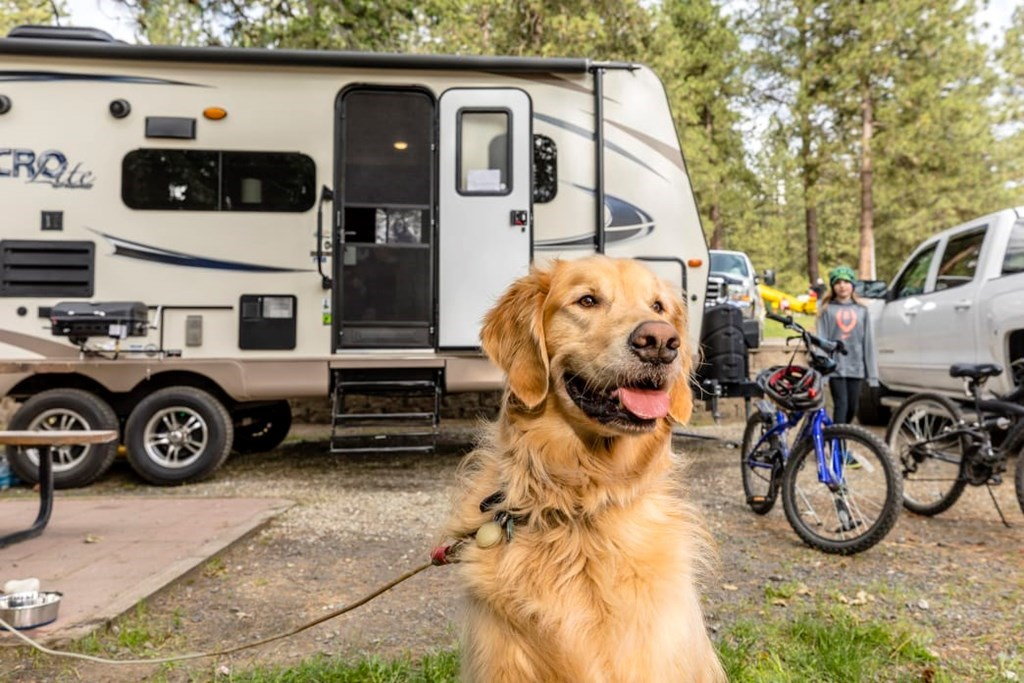 5 Tips for an RV Trip with Your Dog