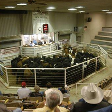 Amarillo Livestock Auction & Stockyard Cafe