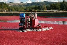 Annual Cranberry Festival in Bandon