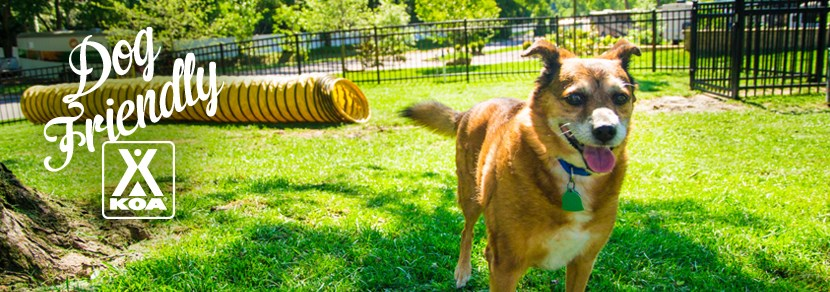 Your furry friend will love playing at our Kamp K9® dog park