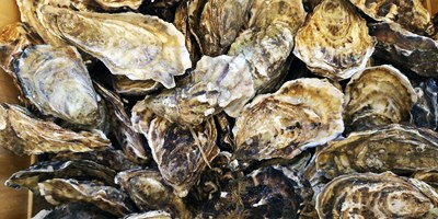 Your Guide to Oysters on Virginia's Eastern Shore