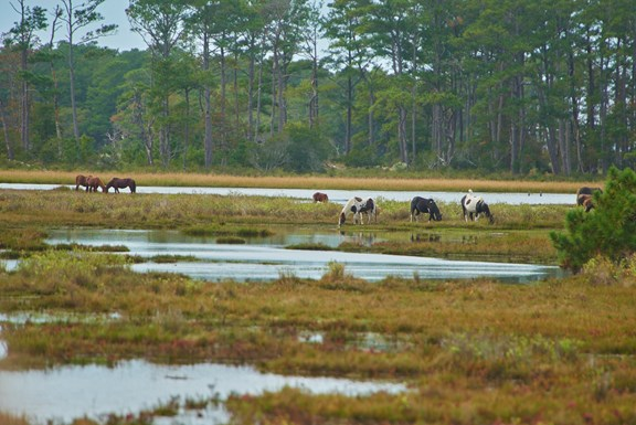 Chincoteague Natonal Wildlife Refuge