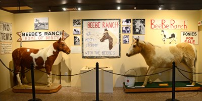 Museums to Visit in and Around Chincoteague