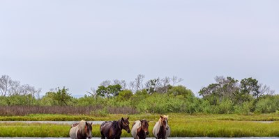 Explore Chincoteague Island With a Tour