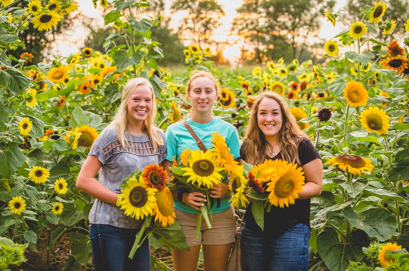 Coshocton Sunflower Festival Photo
