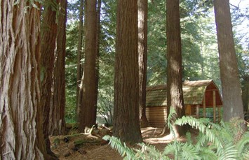 Crescent City / Redwoods KOA Photo