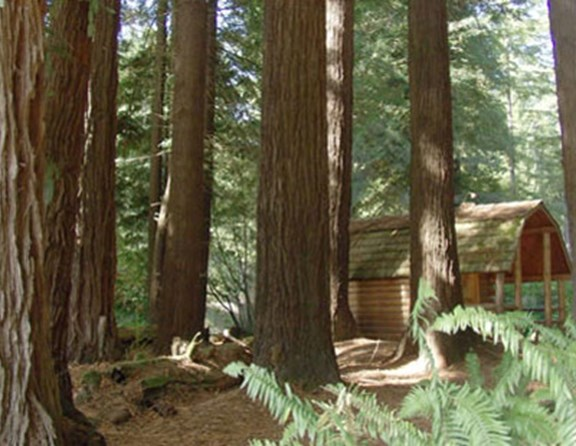 Camping cabins in the Redwoods