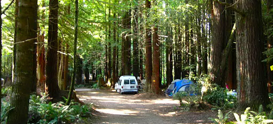 Redwood Forest  Tent Sites