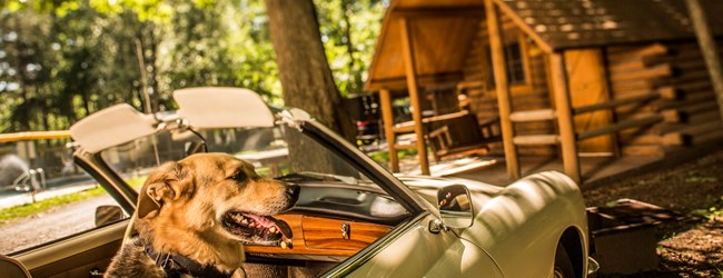 Pet-friendly Camping Cabins