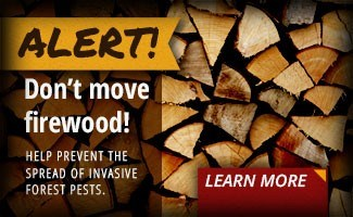 No outside Firewood allowed!  We have options!