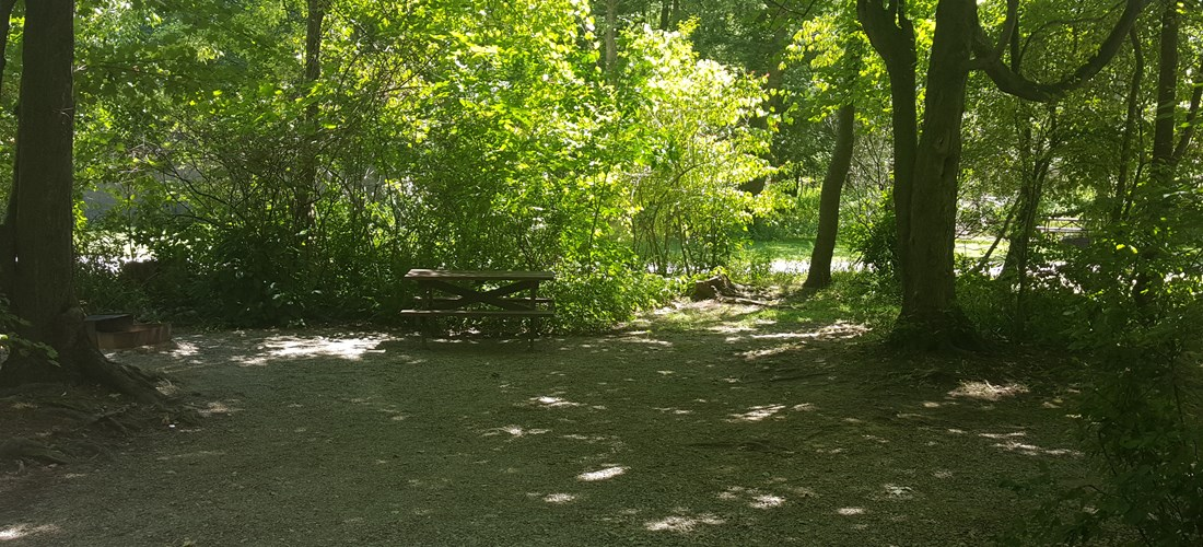 Primitive tent site in the wooded area