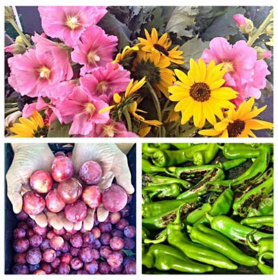 Flagstaff Summer Farmers' Market