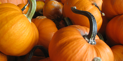 October Fall Festival Weekends of October 15th and 22nd!