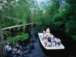 Boat Tours Of The Gator Filled Okefenokee Swamp