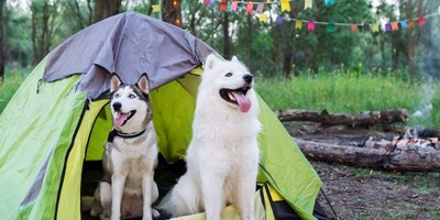 10 THINGS FOR CAMPING WITH DOGS