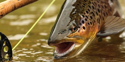 20th Annual Fly Fishing in the Ausable