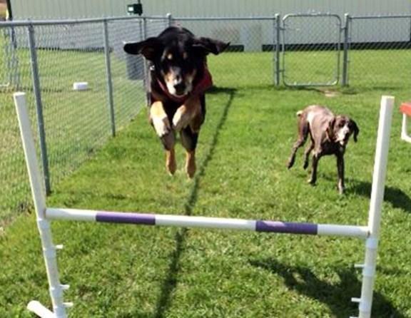 I think the ears make him jump higher! Nice job Bosco.