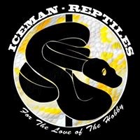 Ice Man Reptiles