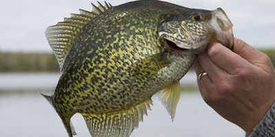Lake Okeechobee Crappie Series