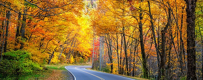 Take a scenic drive to see the colors of fall!
