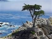 17-Mile Drive, Pebble Beach, CA