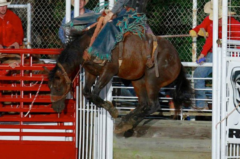 Annual Lion's Club IPRA Rodeo Photo