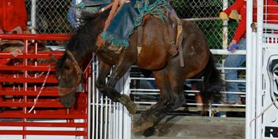 Annual Lion's Club IPRA Rodeo