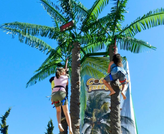 Climbing Coconut Palm Trees
