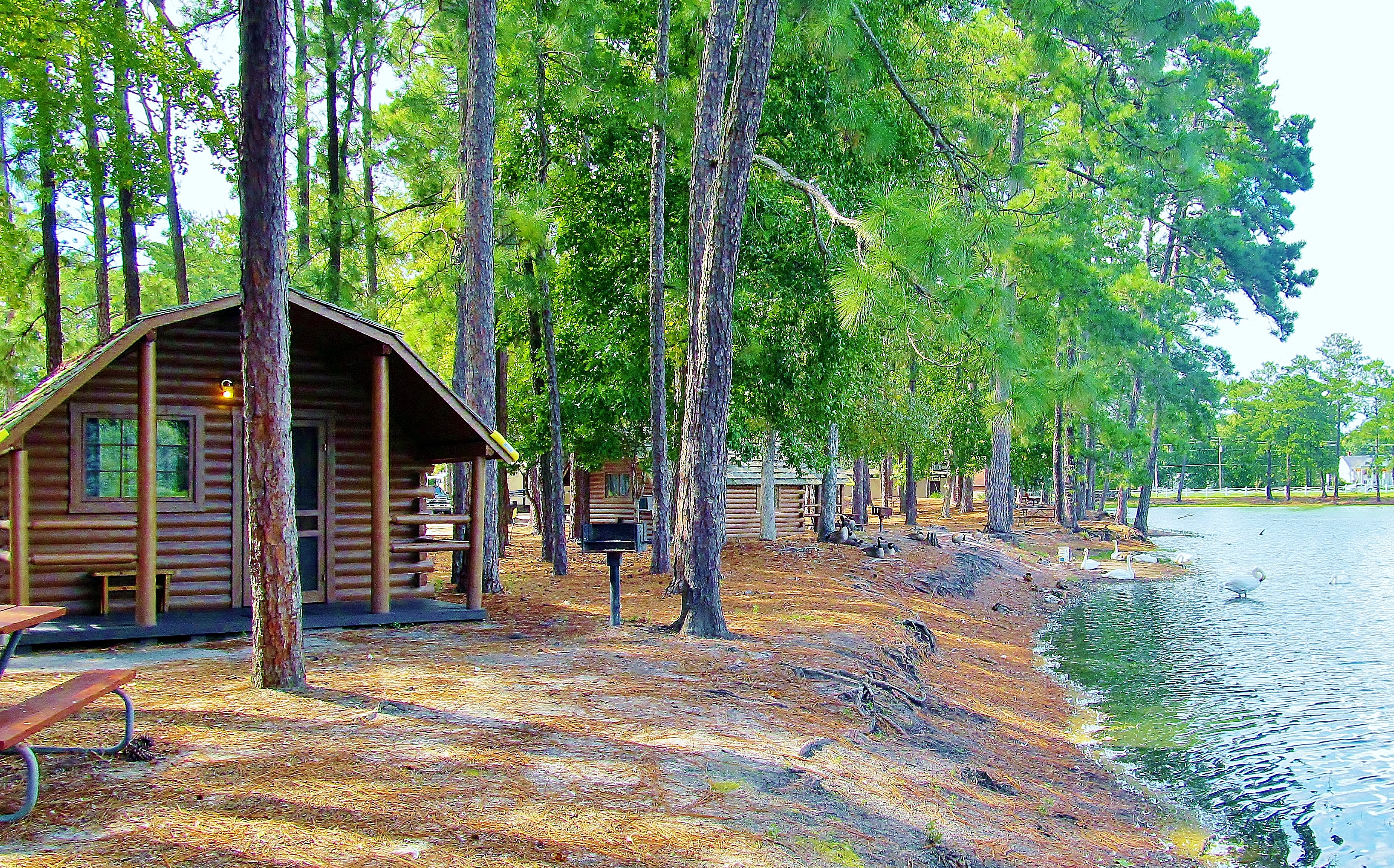 Richmond Hill, Georgia Campground | Savannah South KOA