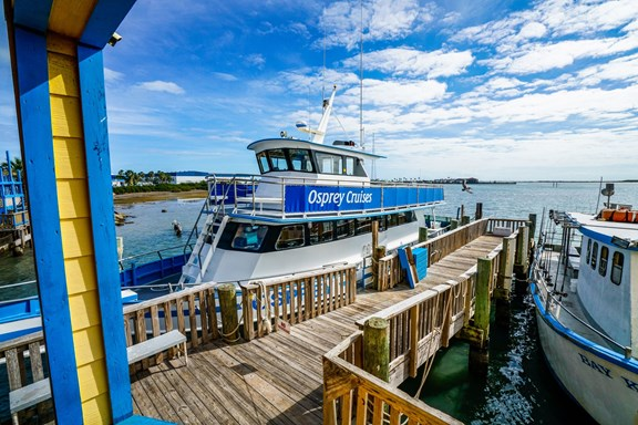 Fishing excursions and Sea Life Safaris with Osprey Cruises