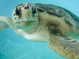 Sea Turtle Days!