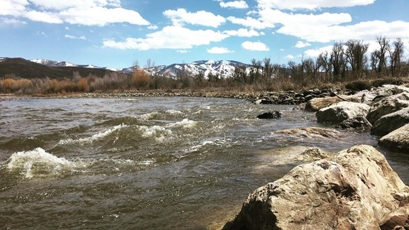 Fish the Yampa