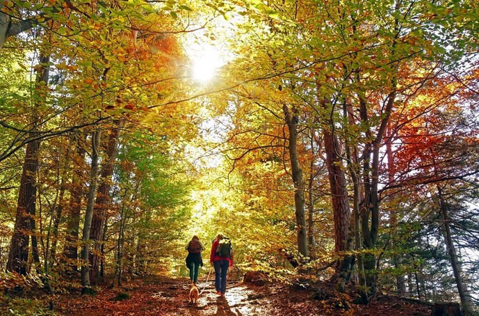10 Of The Best Fall Hikes