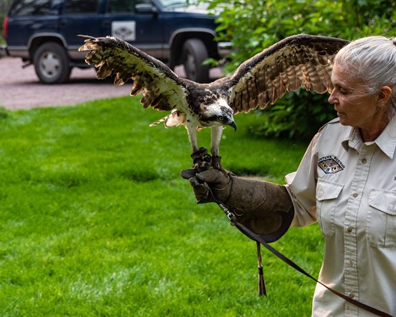 Wild Wings Recovery Birds of Prey Presentations