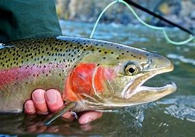 Fly Fishing Casting Clinic